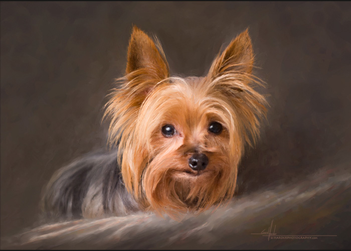 how to take professional pet portraits